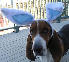 Bunny Wabbit?  WHERE?! by nosajnybor