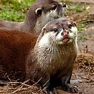 Otters by AnnDixon