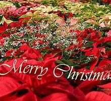 Merry Christmas, Christmas Poinsettia, ne1189c by Tony Weatherman