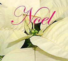 Noel.  White Poinsettia Christmas Card, ne485c by Tony Weatherman