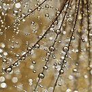 Golden Fairy Shower by Sharon Johnstone