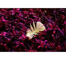 color change Photographic Print