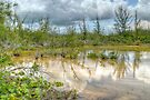 Scenery behind the beaches in Coral Harbour, The Bahamas by Jeremy Lavender Photography