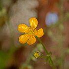 112015 yellow jewel by pcfyi