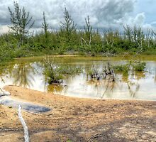 Scenery behind the beaches in Coral Harbour, The Bahamas by 242Digital
