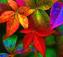 Multi coloured leaves by SteveHphotos