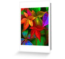 Multi coloured leaves Greeting Card