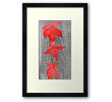 Three red leaves Framed Print