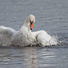 Mute Swan by M.S. Photography/Art