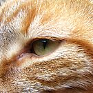 Cat eye close up by Russell Voigt