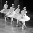 Swan Lake by cherylc1