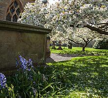 Churchyard blossoms, Overbury by Rebsie Fairholm