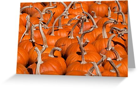Pumpkins by Jane Best