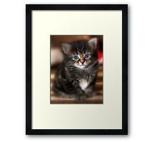 Cookie  Framed Print