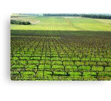 Ferngrove Vineyard # 2 Canvas Print