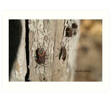 Boxelder Bug Congregation Art Print