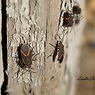 Boxelder Bug Congregation by Lorelle Gromus