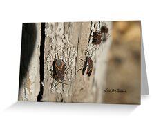 Boxelder Bug Congregation Greeting Card