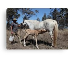 Thirsty Work, this being born Canvas Print