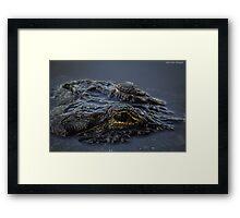 Eye of The Gator Framed Print