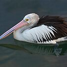 Pelican waiting at a boat ramp by Keith Smith