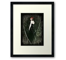 Black Widow II Framed Print