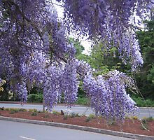 Springtime in Victoria by Pat Yager