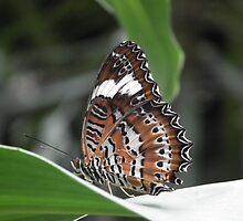 beautil butterfly by geoffro13