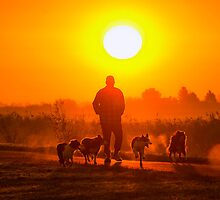 Walk with dogs by THHoang