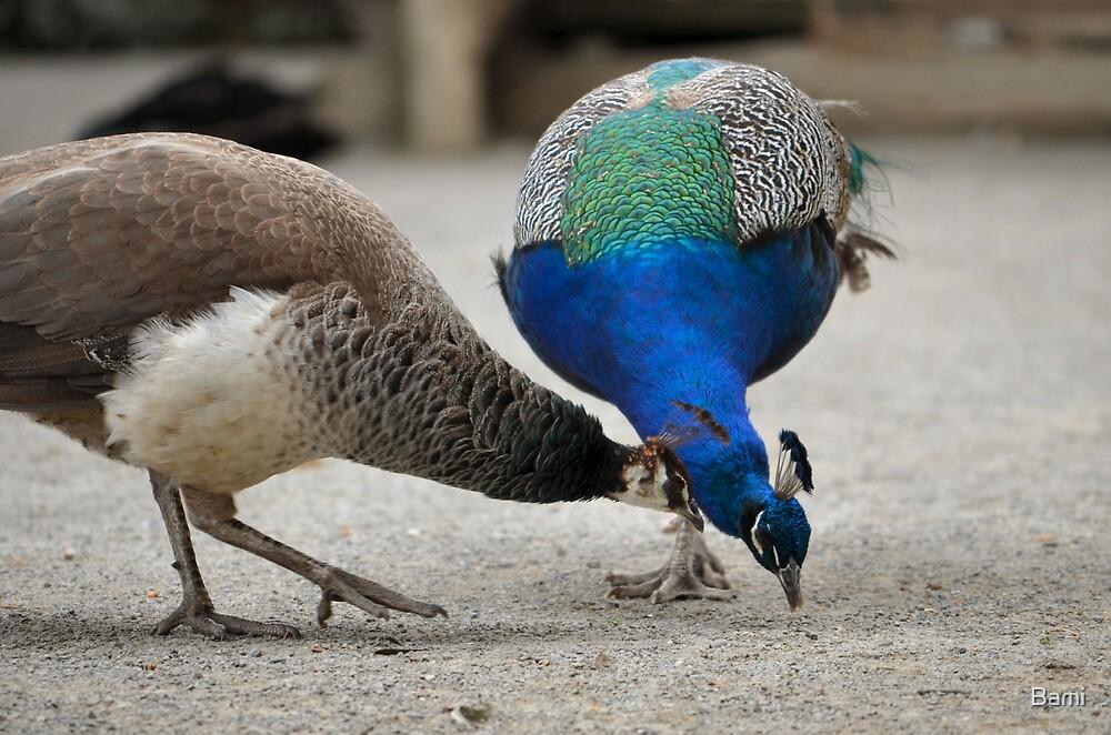 Peacock Pair by Bami