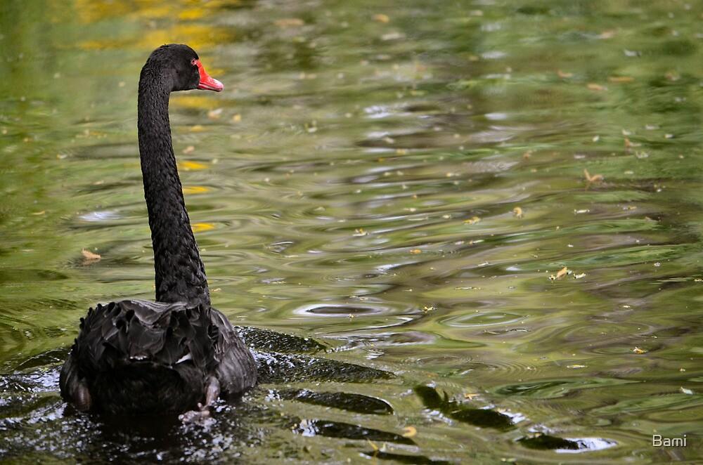Black Swan by Bami