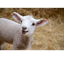 Little Lamb Photographic Print
