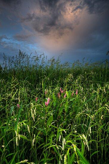 Overcast Life by Bob Larson
