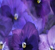 """Purple Pansy iPhone Cover..."" by Rosehaven"