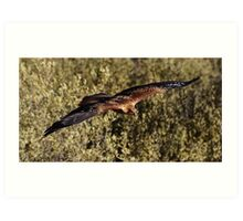 """Brown Kite in Flight"" Art Print"