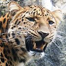 Amur Leopard  by JenniferLouise
