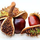 Display of Conkers by karina5