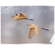 Flying Together At Dawn Poster