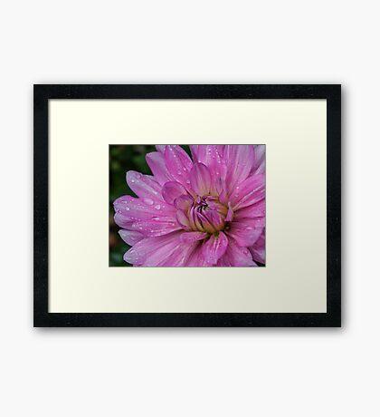 Late Bloom Framed Print