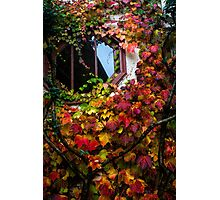 A Window in Fall Colors Photographic Print