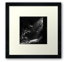 The Light at the End of the Forest Framed Print
