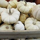 White Pumpkins by joan warburton