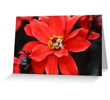 Bee on Dahlia Flower Greeting Card
