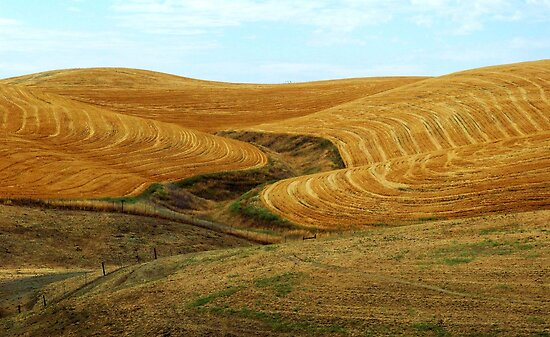 After The Harvest – Yolo County, CA by Rebel Kreklow