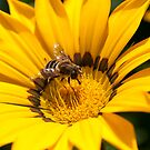 Wasp on Flower by Imager