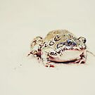 Untitled by Olivia McNeilis