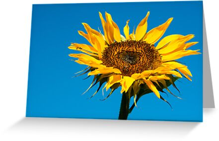 Yellow against blue by Karen Havenaar