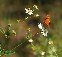 Butterfly on Widflower by Sandy Keeton