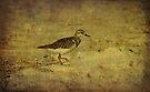 Shore Bird by Sandy Keeton