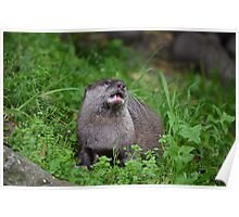 Asian Small Clawed Otter Poster